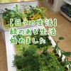 観葉植物を買ってみた。緑のある生活はじめました