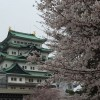 名古屋城で桜を撮影。とても綺麗にとれた!