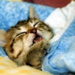 睡眠について考えてみた
