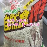 茹で押し麦の作り方 作り置きしていけば意外と便利。【料理】