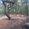 旅ランに挑戦!三保の松原を1.5kmほど走ってきた!