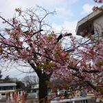 馬事公苑@世田谷 春遠からじ。春の準備を迎える公園を散歩してきた。