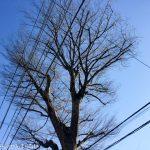最強寒波到来!防寒対策をついに導入した1月2週目ラン。【ラン報告】