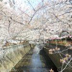 中目黒の桜を見てきた![がんまらない日記]