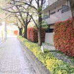 桜の時期も終了。緑が増えてきた4月3週目ラン【ラン報告】